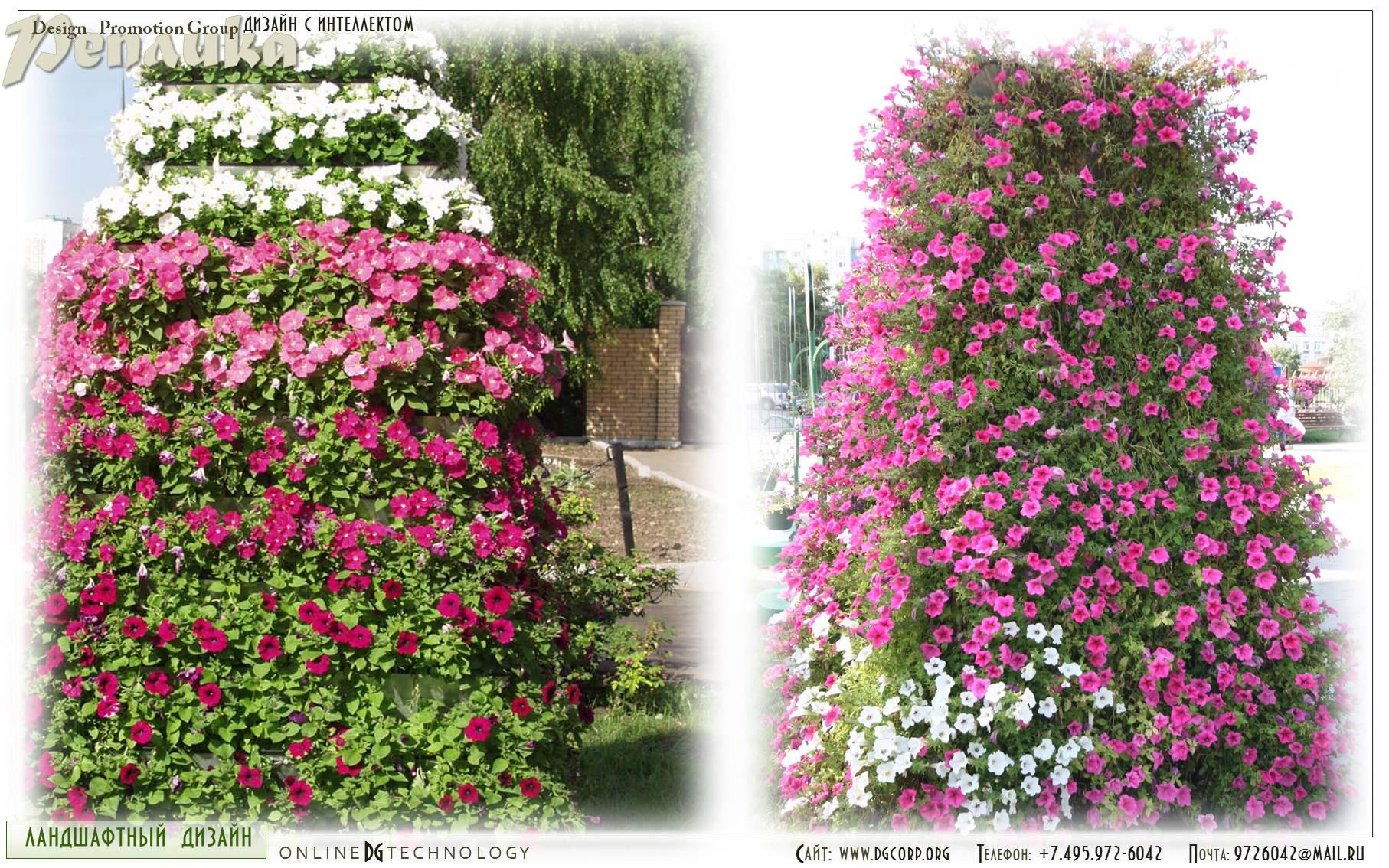 Многолетних вьющихся цветов фото и названия