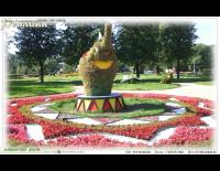 Растительная композиция слон